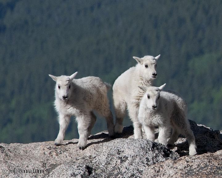 Wildlife Photography Dannenattundrawinds