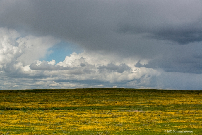 Skies and wildflowers dominate a well-watered spring grasslands in SE Colorado.